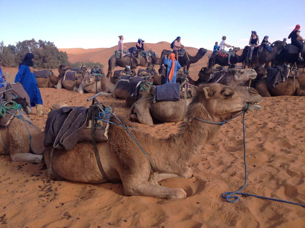 camel_sandmouth