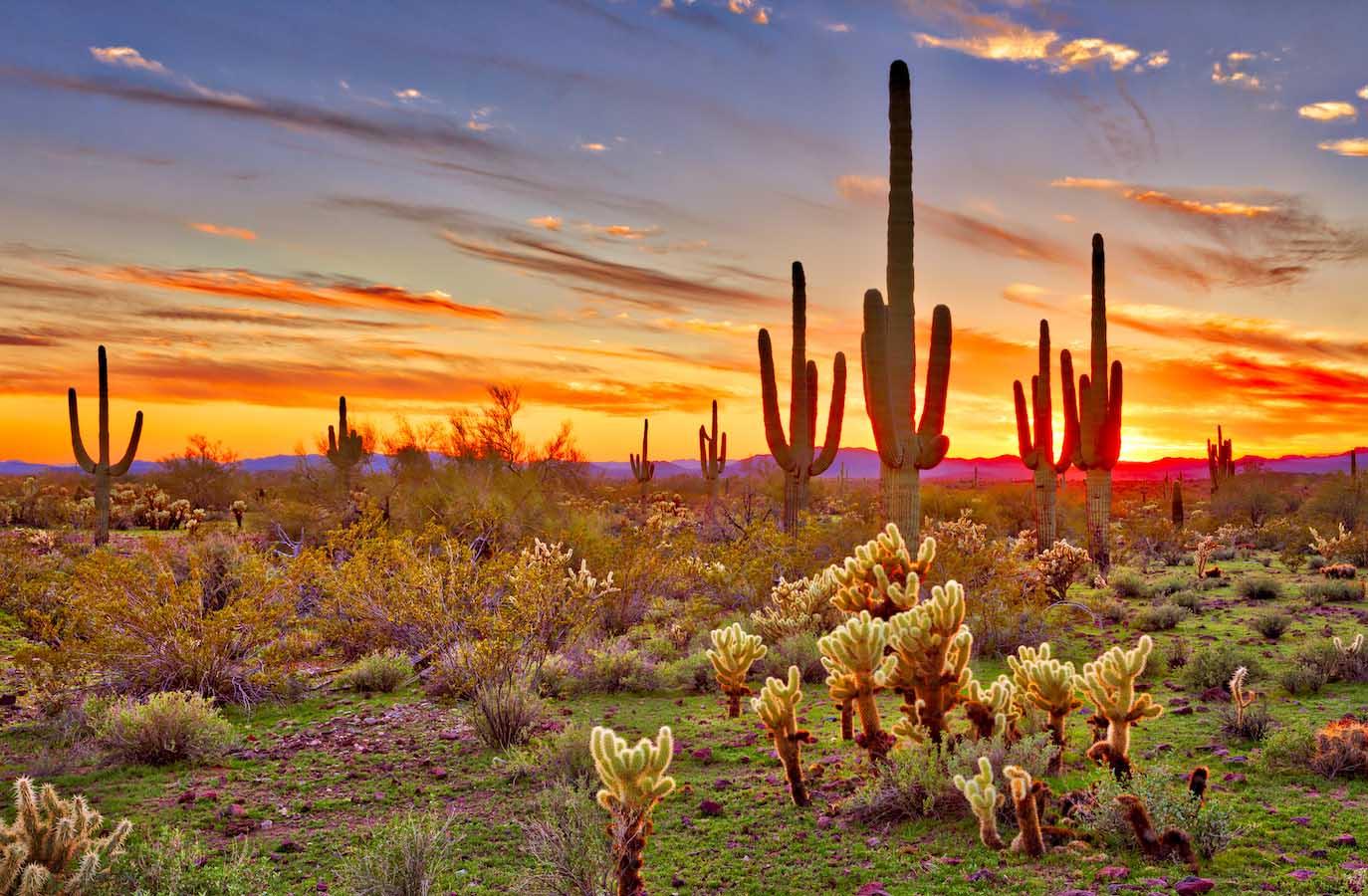 Sonoran-Desert-Sand